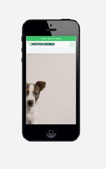 notochordarena iphone